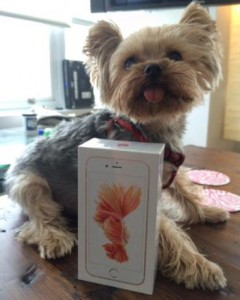 iPhone 6S Photo Samples